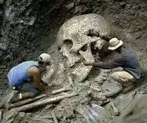 Goliath's skull found forgery